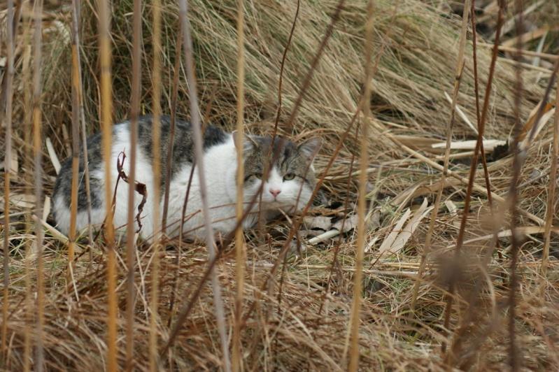 Chat et chevreuil Parc_n10