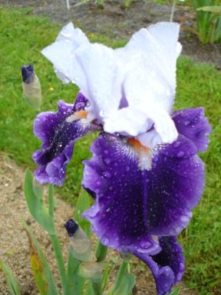 Conservatoire de l'Iris ; mai 12 Belle_11