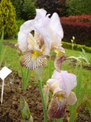 Conservatoire de l'Iris ; mai 12 Butter10
