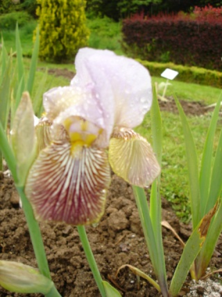 Conservatoire de l'Iris ; mai 12 Butter11