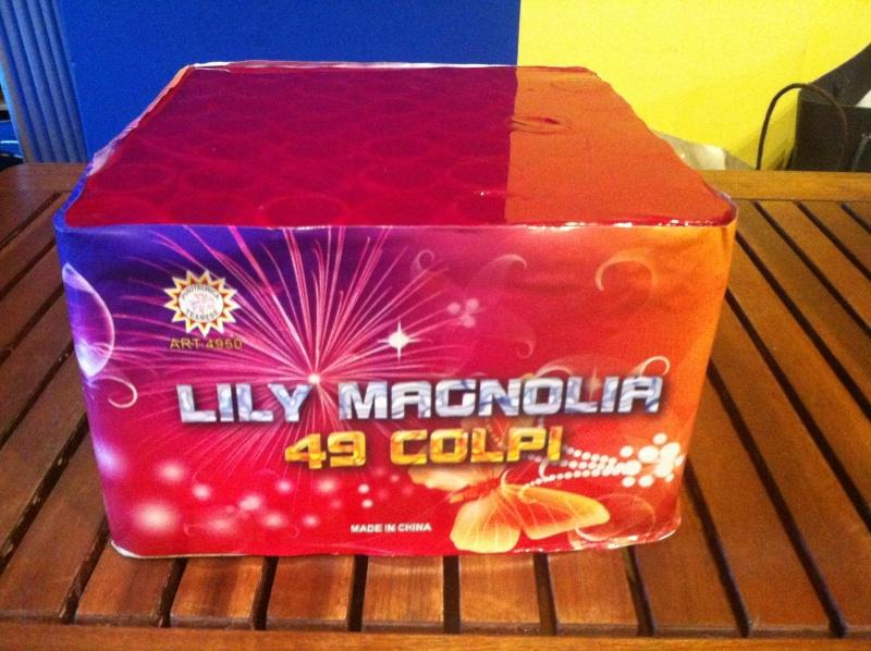 Lily magnolia 49cp Magnol10