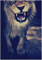 ✖ Avatars ✖ Lionav11