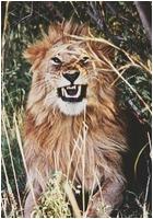 ✖ Avatars ✖ Lionav12
