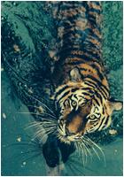 ✖ Avatars ✖ Tigera10
