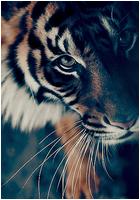 ✖ Avatars ✖ Tigera12