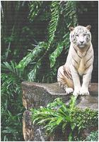 ✖ Avatars ✖ Tigera13