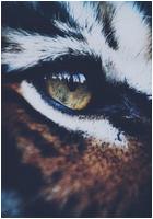 ✖ Avatars ✖ Tigera14