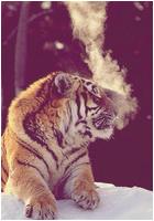 ✖ Avatars ✖ Tigera15