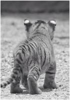 ✖ Avatars ✖ Tigera17