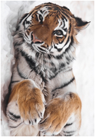 ✖ Avatars ✖ Tigera18