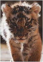 ✖ Avatars ✖ Tigera19