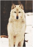 ✖ Avatars ✖ Wolfav10