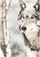 ✖ Avatars ✖ Wolfav12