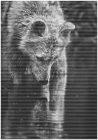 ✖ Avatars ✖ Wolfav13