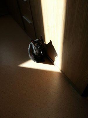 Hortensia, femelle noire, née le 01/01/2012, en don libre 10102210