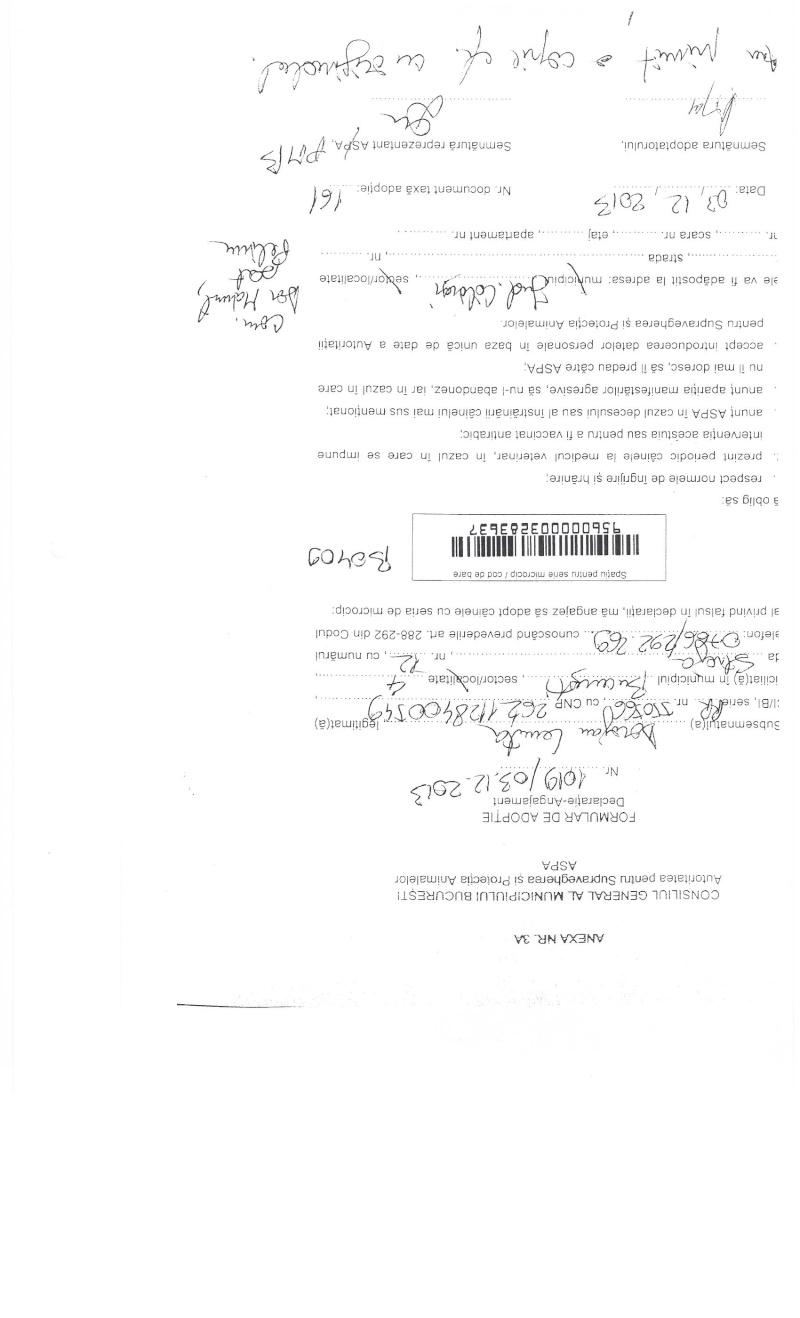 LA VIE COMME CADEAU DE NOEL - 13 CHIENS A SORTIR DE L'EQUARRISSAGE - R - Page 2 Sortie13