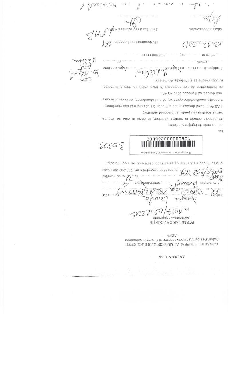 LA VIE COMME CADEAU DE NOEL - 13 CHIENS A SORTIR DE L'EQUARRISSAGE - R - Page 2 Sortie15