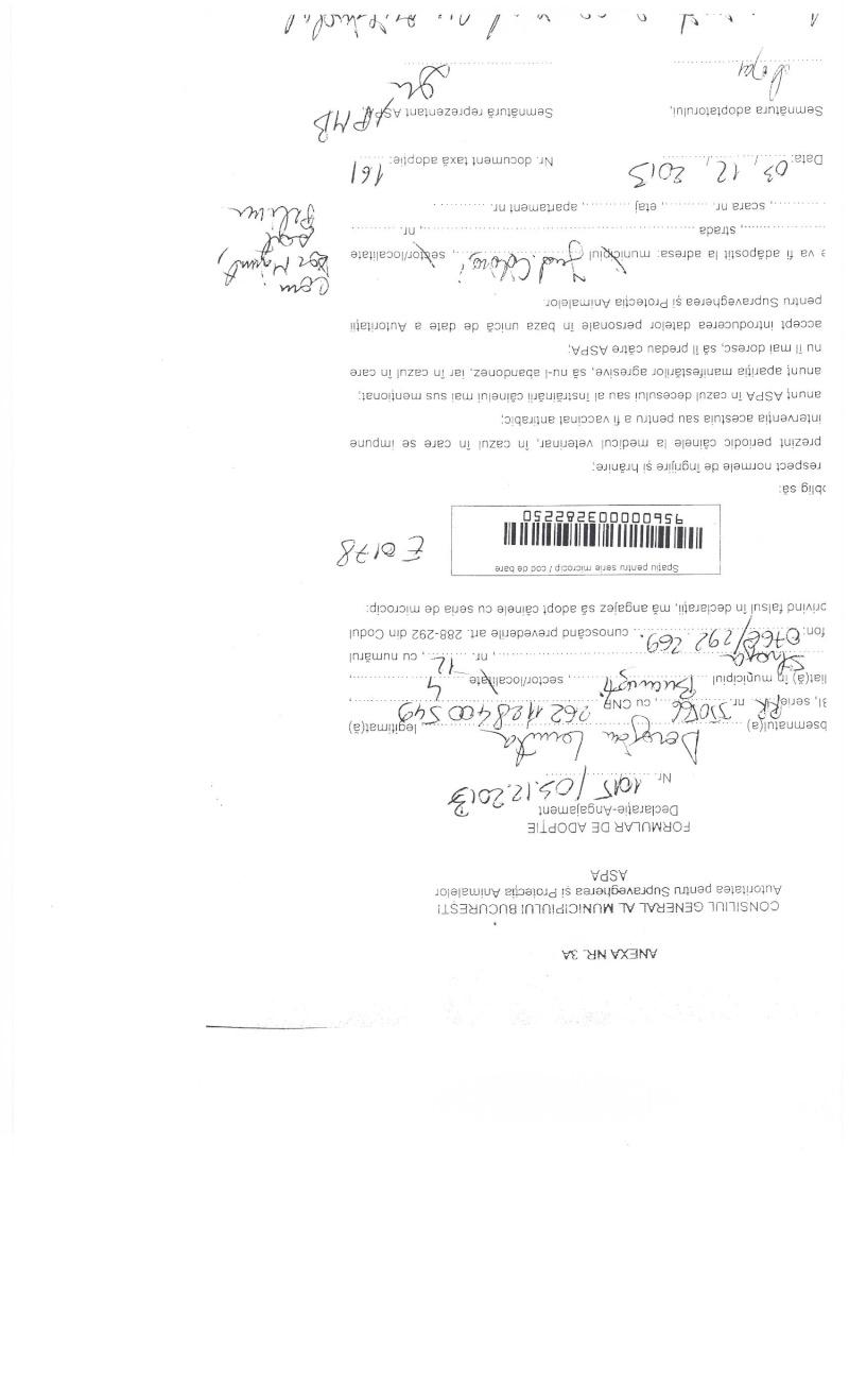 LA VIE COMME CADEAU DE NOEL - 13 CHIENS A SORTIR DE L'EQUARRISSAGE - R - Page 2 Sortie16