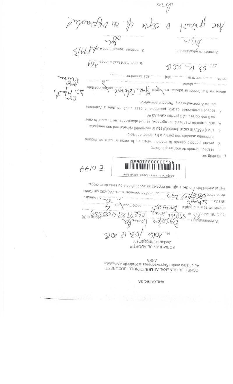 LA VIE COMME CADEAU DE NOEL - 13 CHIENS A SORTIR DE L'EQUARRISSAGE - R - Page 2 Sortie17