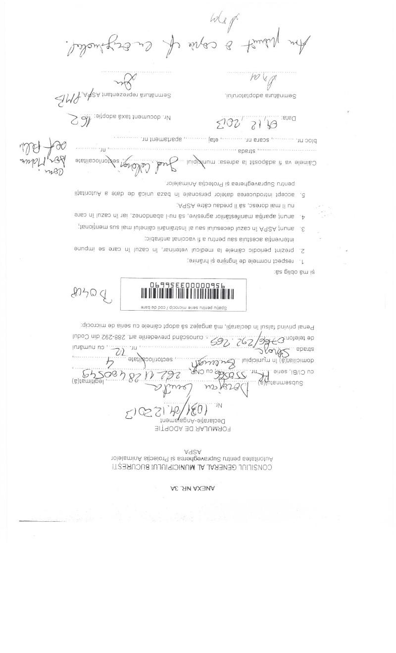 LA VIE COMME CADEAU DE NOEL - 13 CHIENS A SORTIR DE L'EQUARRISSAGE - R - Page 2 Sortie18