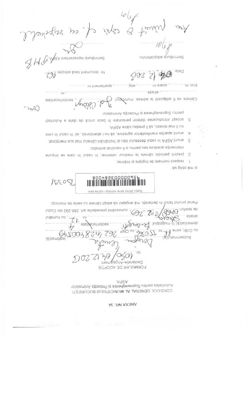 LA VIE COMME CADEAU DE NOEL - 13 CHIENS A SORTIR DE L'EQUARRISSAGE - R - Page 2 Sortie19