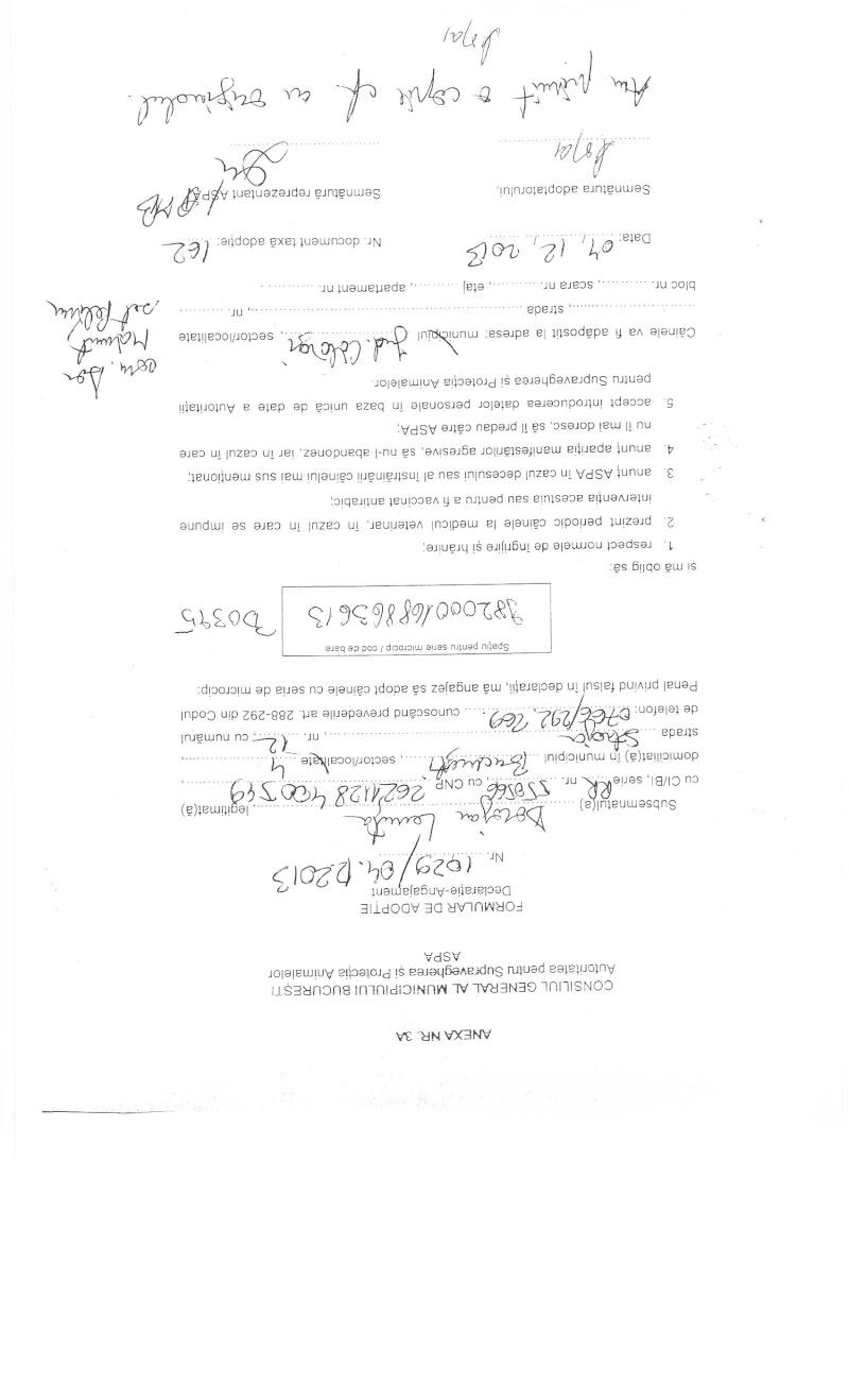LA VIE COMME CADEAU DE NOEL - 13 CHIENS A SORTIR DE L'EQUARRISSAGE - R - Page 2 Sortie20