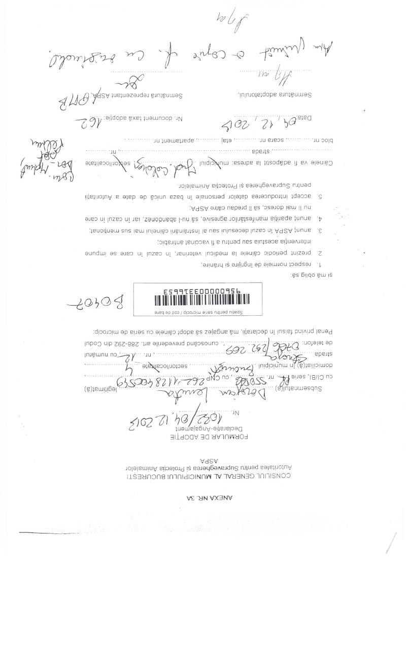 LA VIE COMME CADEAU DE NOEL - 13 CHIENS A SORTIR DE L'EQUARRISSAGE - R - Page 2 Sortie21
