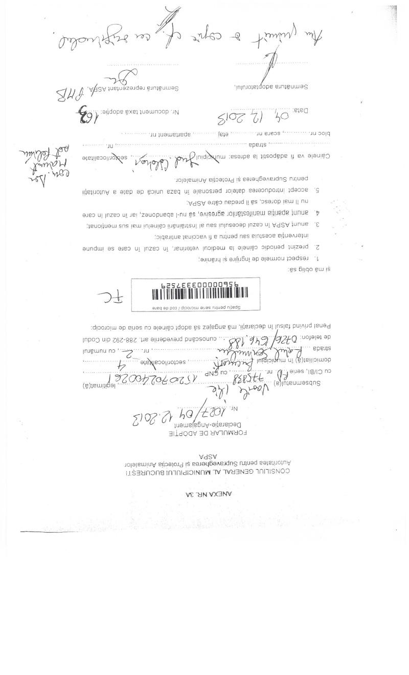 LA VIE COMME CADEAU DE NOEL - 13 CHIENS A SORTIR DE L'EQUARRISSAGE - R - Page 2 Sortie22