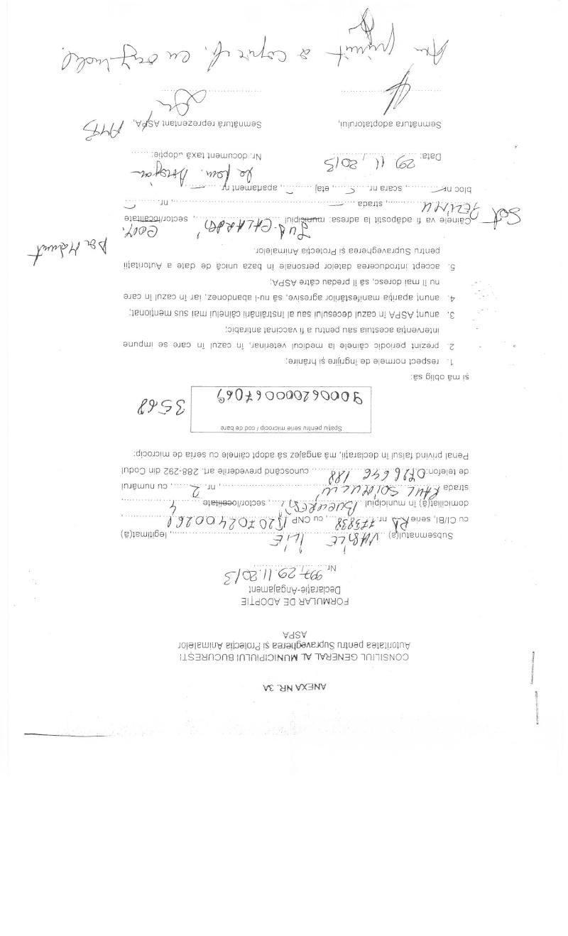 LA VIE COMME CADEAU DE NOEL - 13 CHIENS A SORTIR DE L'EQUARRISSAGE - R - Page 2 Sortie26