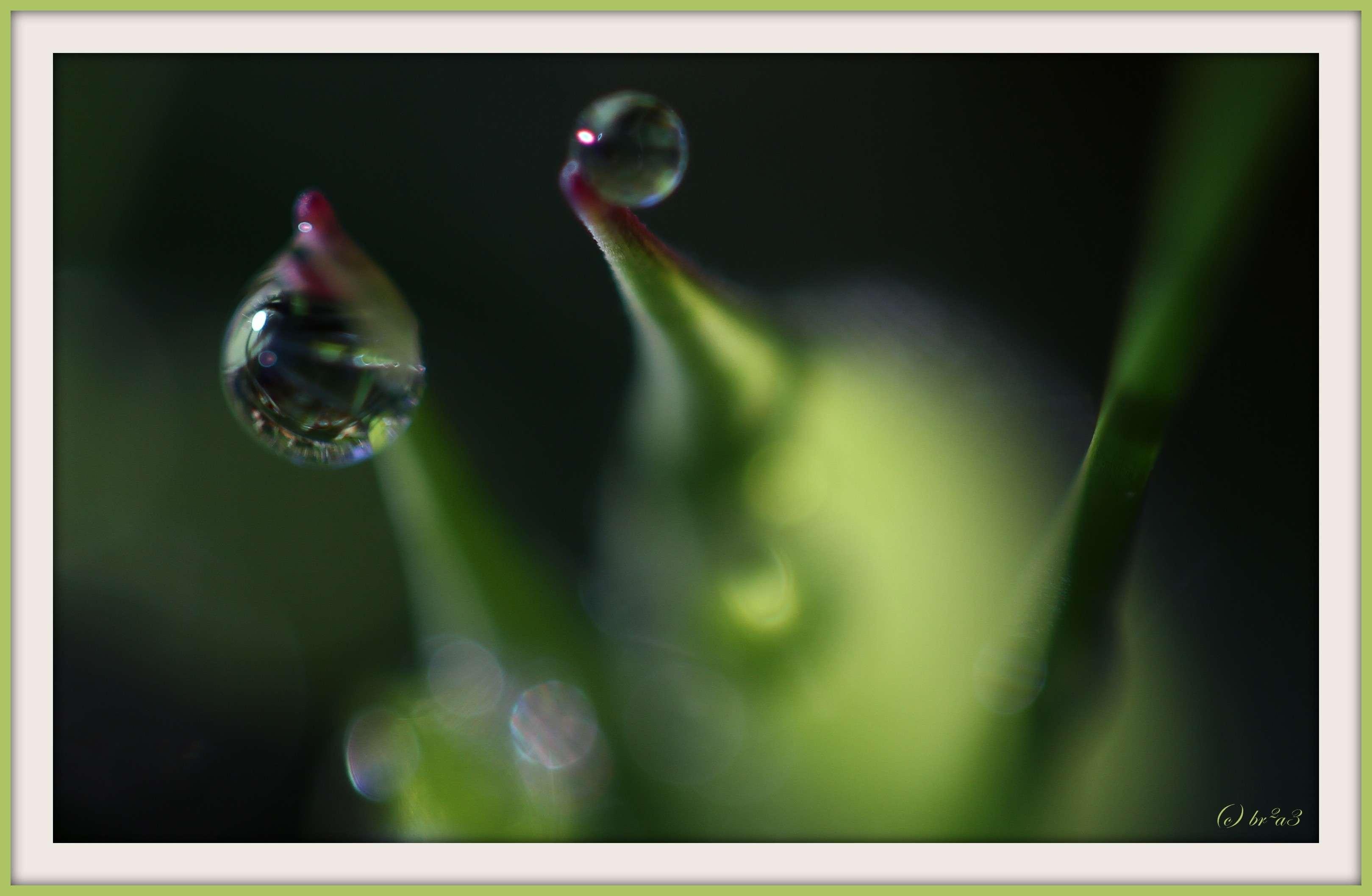 Variations vertes/emeraudes/chartreuses/olives/cinâbres Bcs_5510