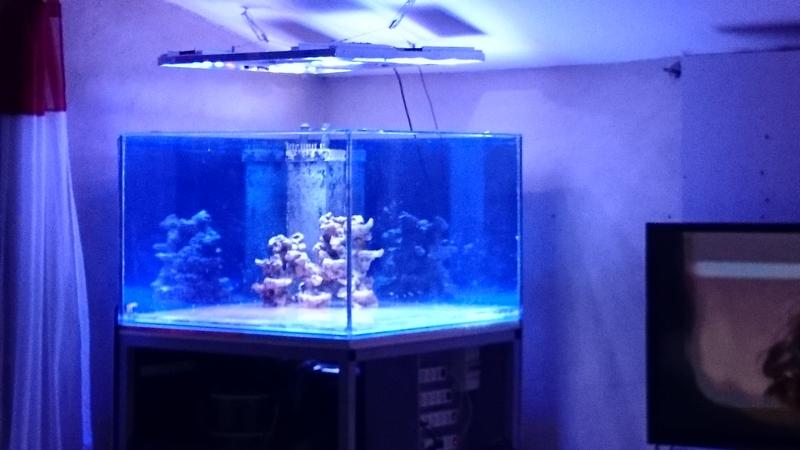 reef cube by hotmars  Dsc_0434