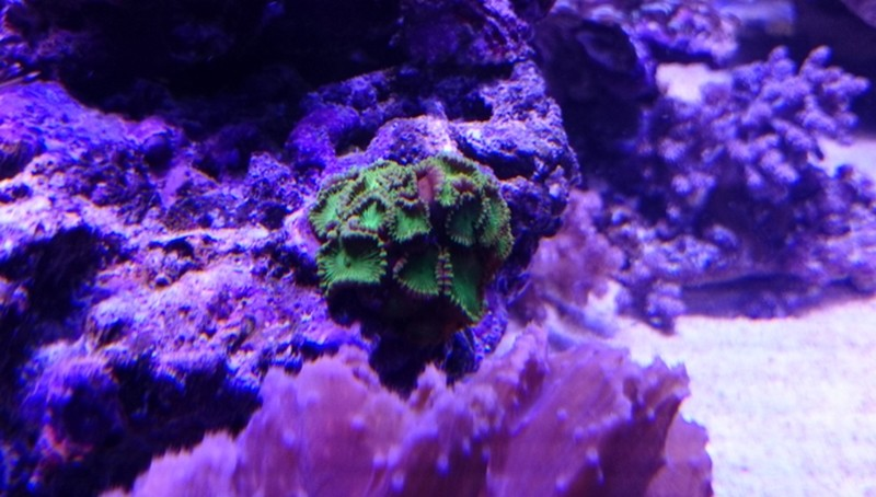 reef cube by hotmars - Page 4 Dsc_0527