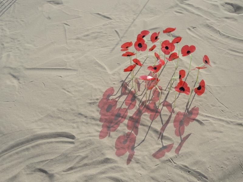 Balade dans la Somme 19, 20 et 21 Avril 2014  Dscn0113
