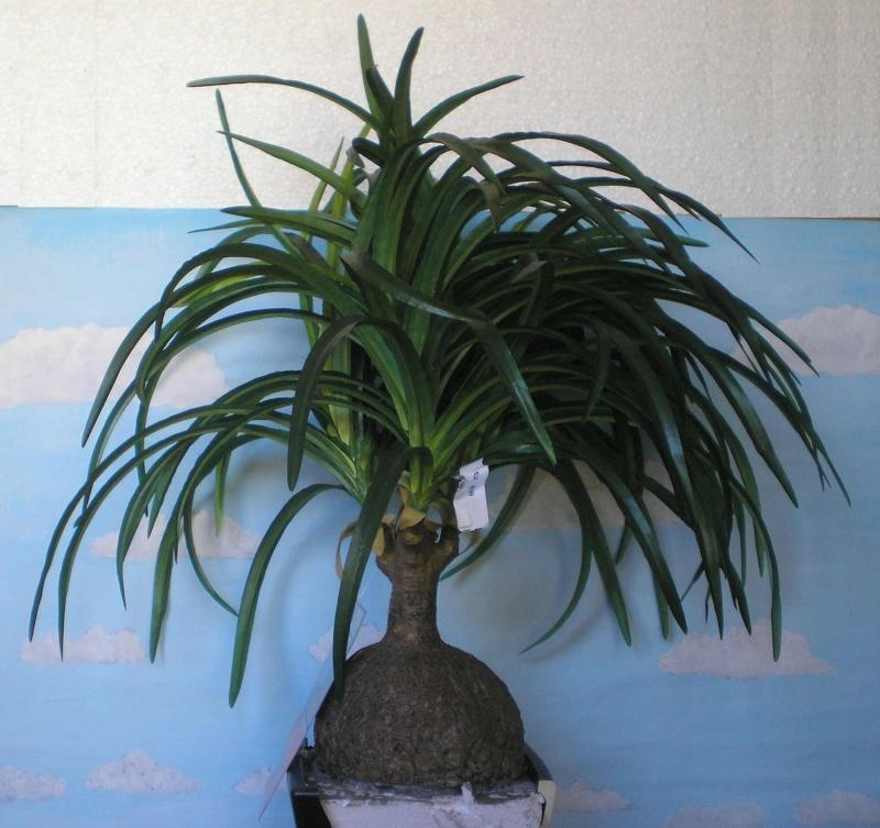 Preiswertes Material zur Pflanzengestaltung 006a_k10