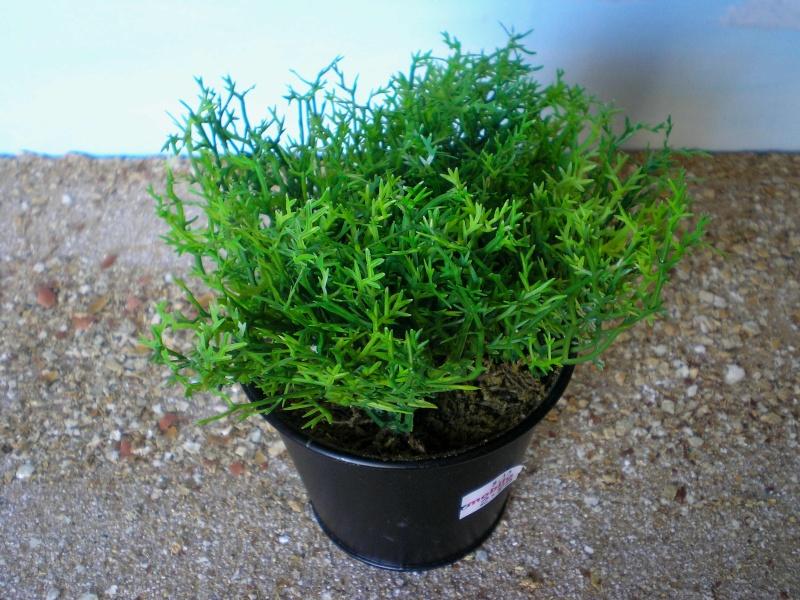 Preiswertes Material zur Pflanzengestaltung Immo_713