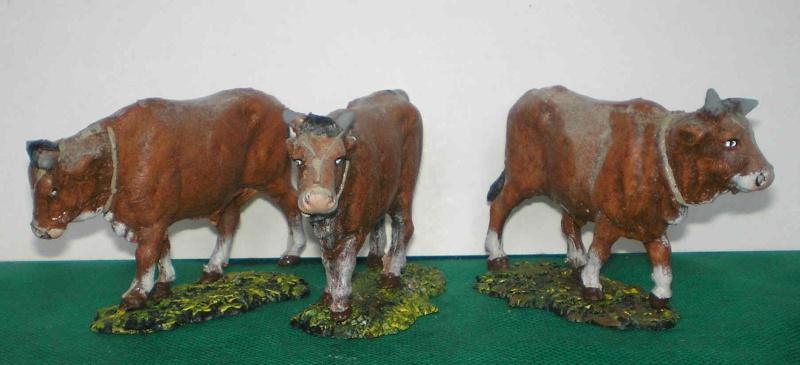 Meine Longhorn-Herde wächst - Seite 2 Zugoch10