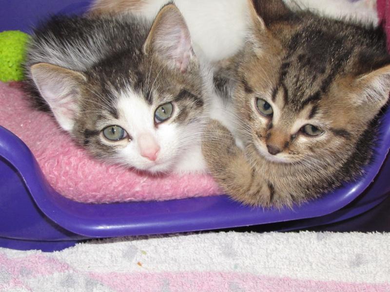 Aujourd'hui 23 mai 3 nouveaux chatons au refuge 05610