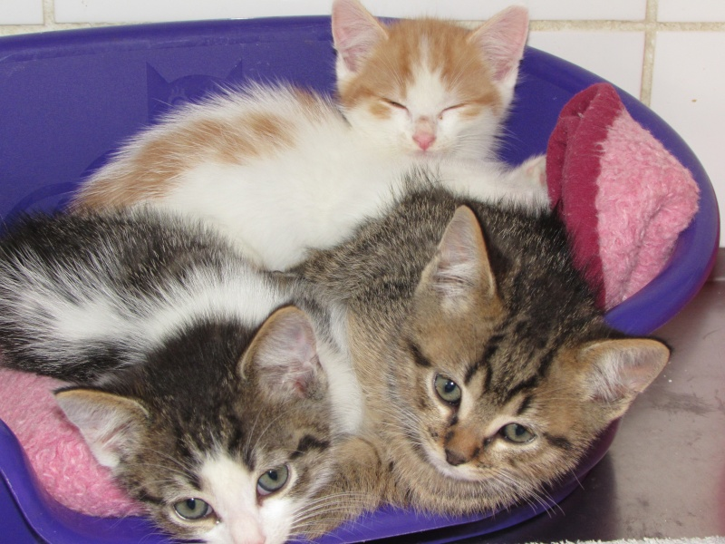 Aujourd'hui 23 mai 3 nouveaux chatons au refuge 05910