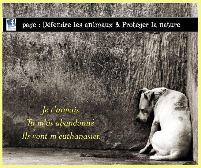 L'abandon d'un animal 60161210
