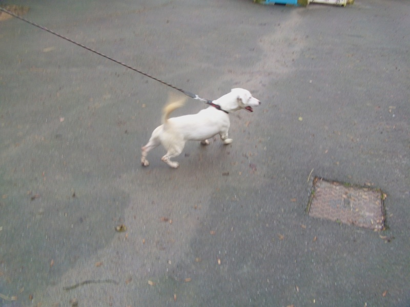SKIP le chien Dvci0823