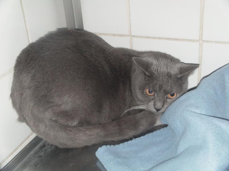 chatte Fée Clochette Dvci1521