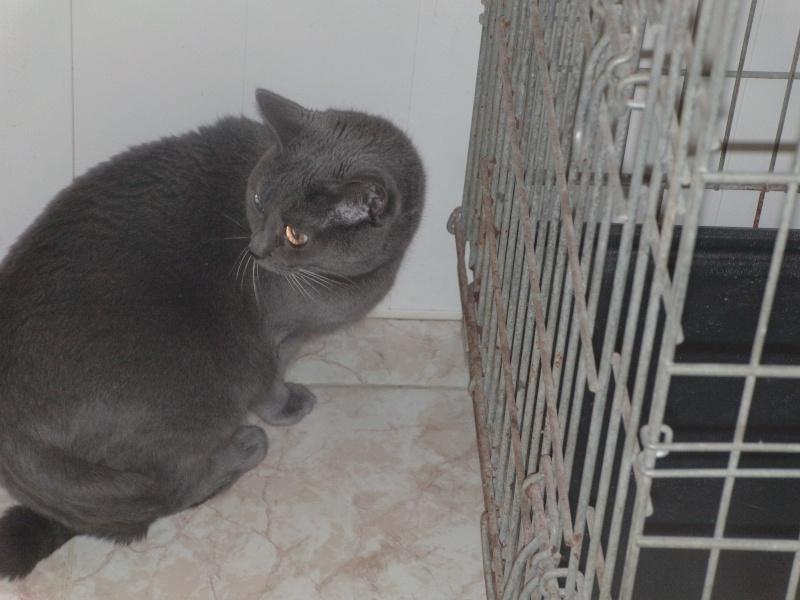 chatte Fée Clochette Dvci1530