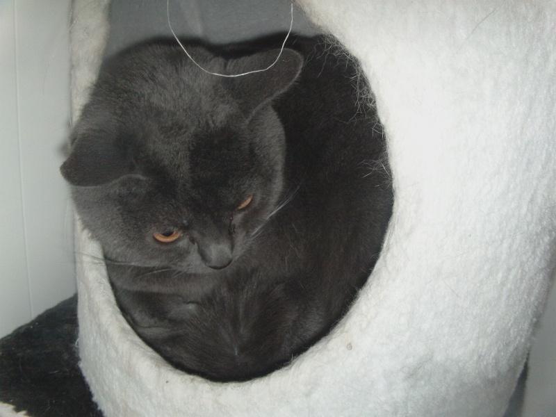 chatte Fée Clochette Dvci1546