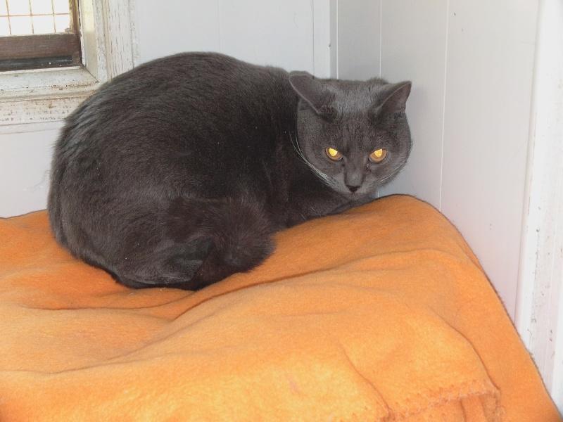 chatte Fée Clochette Dvci1610