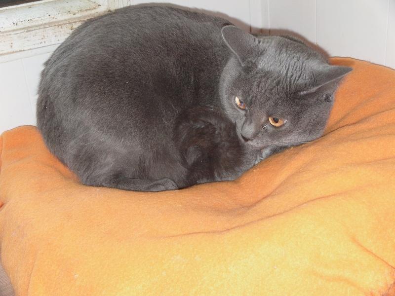 chatte Fée Clochette Dvci1611