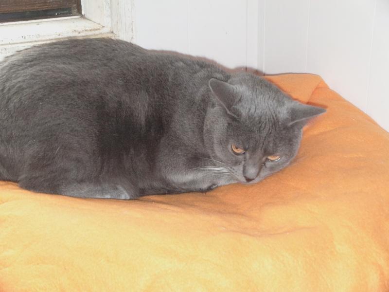 chatte Fée Clochette - Page 2 Dvci1615