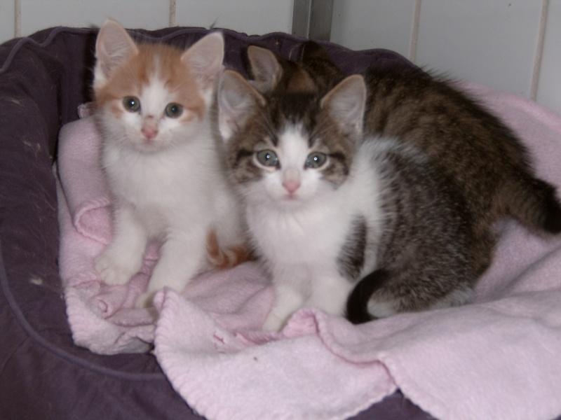 Aujourd'hui 23 mai 3 nouveaux chatons au refuge Suc30144