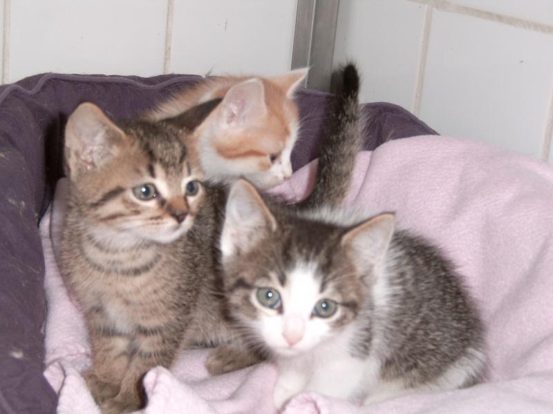 Aujourd'hui 23 mai 3 nouveaux chatons au refuge Suc30145