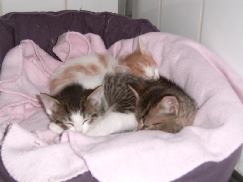 Aujourd'hui 23 mai 3 nouveaux chatons au refuge Suc30146