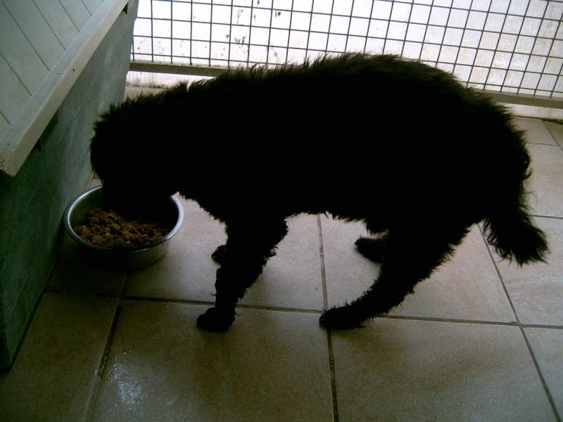 NICO le chien Suc30152